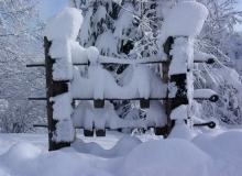 Plemenitas zimi (6)